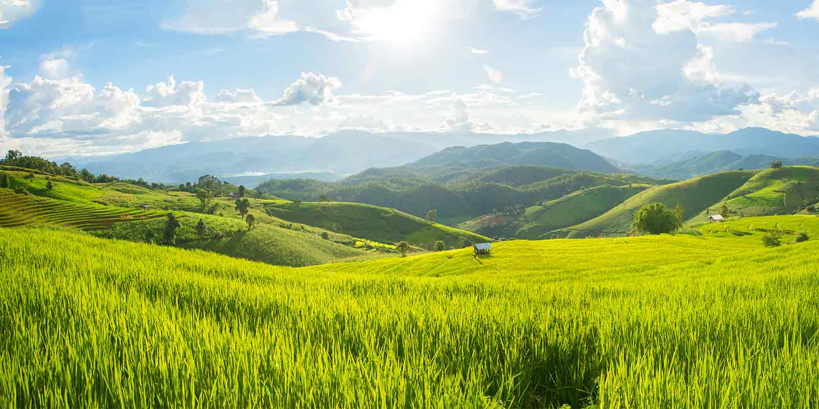 Picturesque scenery of rice fields near Chiang Mai