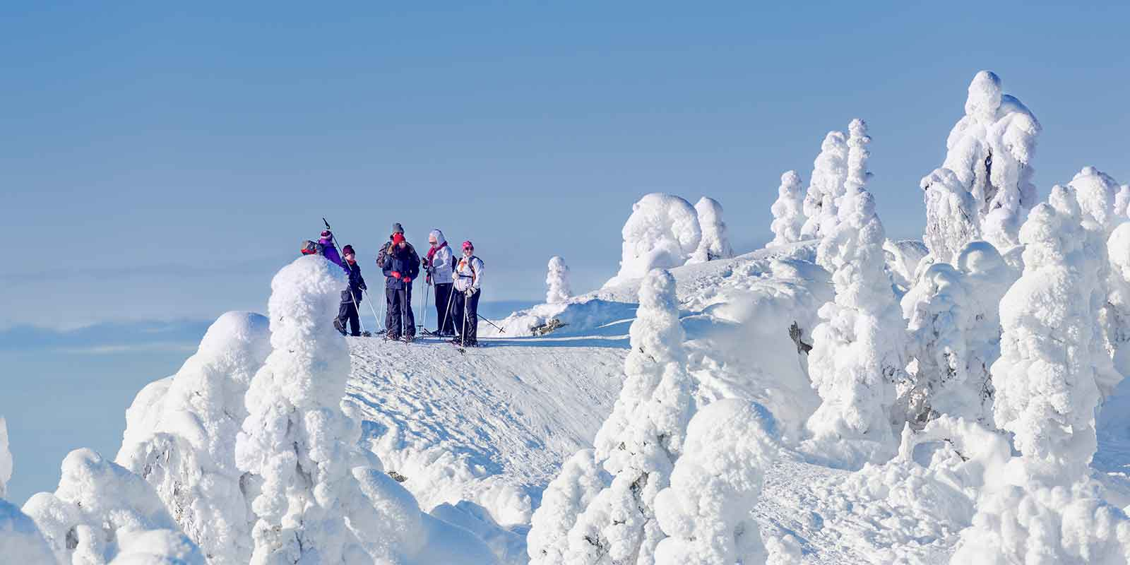 Cross-country skiiers in Koli National Park in Finland