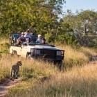 Group on game drive with leopard