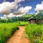 Hiking trail and countryside at Bunung Village in Cambodia