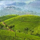 Scenery of Munnar tea plantations in Kerala, India