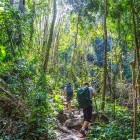 Trekkers in jungle in Thailand
