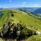 Group of hikers climbing mountain in Austria