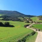 Hikers following the Camino de Santiago through vineyard