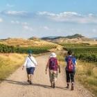 Hikers following the Camino de Santiago through vineyard in Rioja region