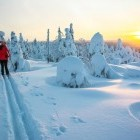 Cross country skiier in the winter landscape of Lapland in Finland