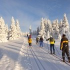 Group of cross-country skiiers in snowy wilderness landscape