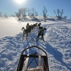 Dog sled in snowy winter landscape