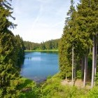 Lake and forest in Harz area