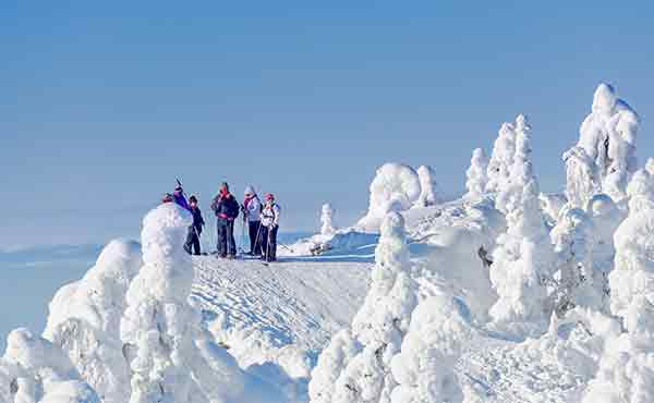 Cross-country skiiers in Koli National Park in Finland